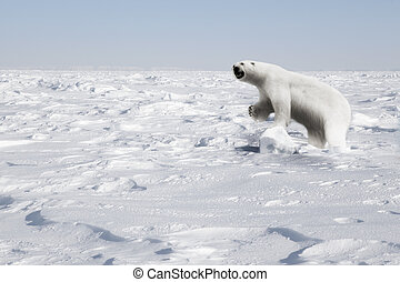 Polar Bear - A polar bear in a natural landscape - Svalbard,...