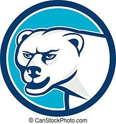 Polar Bear Head Circle Cartoon