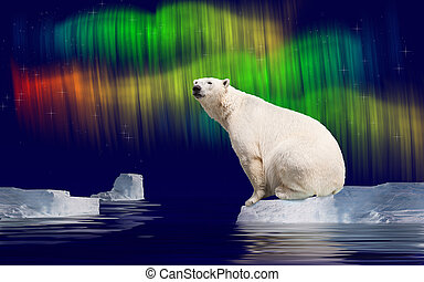Polar bear in Arctic on ice flow and polar light