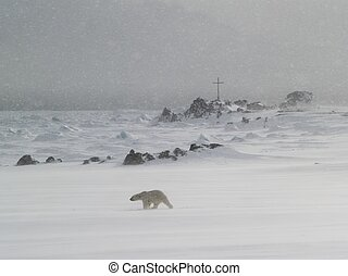 Polar bear in the snow blizzard