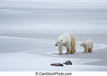 polar bear mom and cub on ice