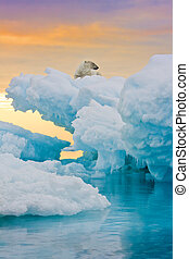 Polar bear sitting on frozen ice outcrop. Vertically framed shot.