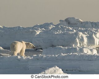 Polar bear on the glacier ice
