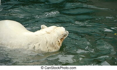 Polar bear playing in water