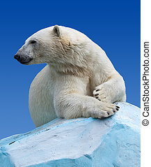 polar bear   - polar bear in wildness area against sky
