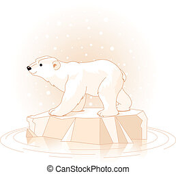 Polar Bear  - Polar Bear on the ice floe