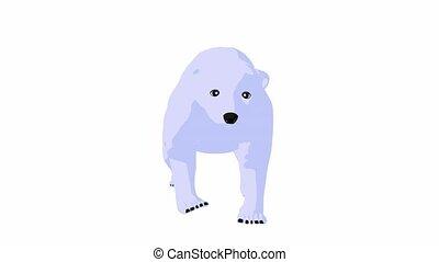 Polar Bear - Polar bear walking on a white background