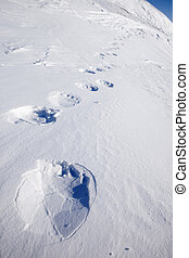 Polar Bear Trail - Footprints from a polar bear in the snow...