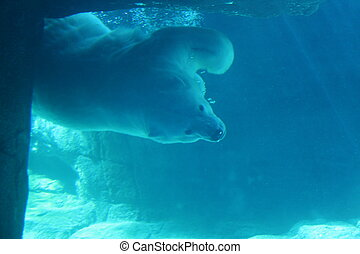 A polar bear swimming underwater in an enclosure.