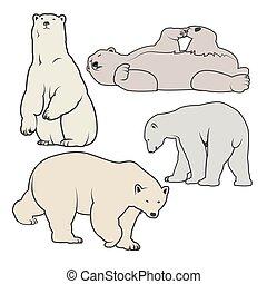 Polar bear vector illustration