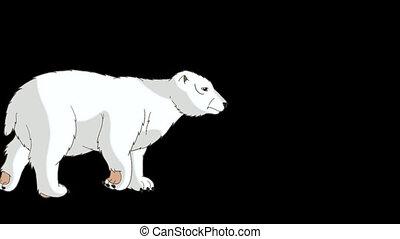 Polar Bear Walks Alpha - Big Polar Bear Walks. Light gray...