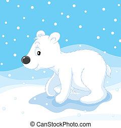 Polar bear - white bear cub walking on snow