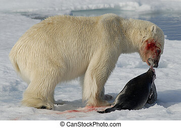 Polar bear with seal