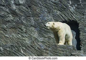 Polar bear Zoo Prague