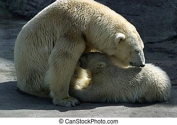 Polar bears - Family of polar bears. Illustration for...