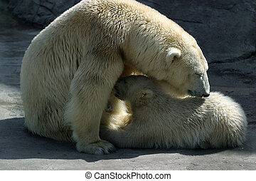 Polar bears - Family of polar bears. Illustration for...