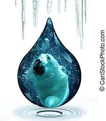 polar björn, och, klimat ändra