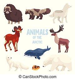 polar, cão, animais, raposa, montanha, jogo, ártico, assassino, cabra, urso, bisonte, vetorial, ilustração, fundo, baleia, guaxinim, lobo, branca, lemming