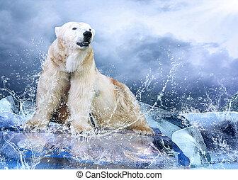 polar, cazador, agua helada, drops., oso, blanco