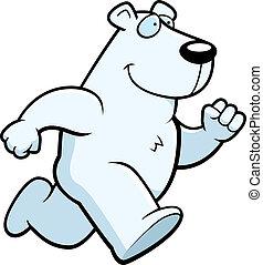 polar, corriente, oso