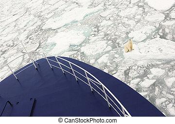 polar, schiff, bär