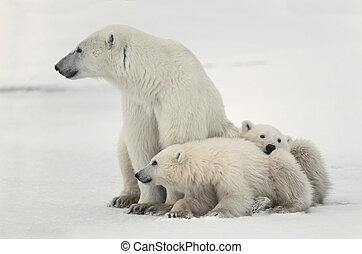 winter wildlife stock photo images 59 777 winter wildlife. Black Bedroom Furniture Sets. Home Design Ideas
