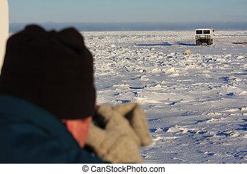 polar, sighting, bjørn