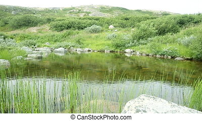 polar small river in the tundra. voices of birds