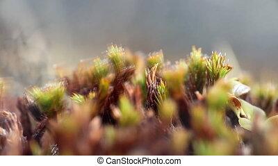 polar tundra plants mountain macro - Arctic prairie plants...