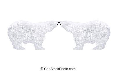 polarny niedźwiedź