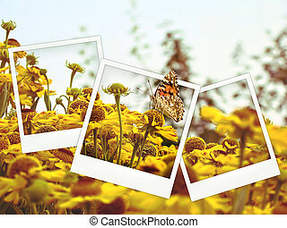 Polaroid collage of yellow flowers and butterfly