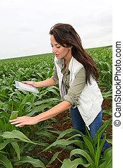 pole, agronomist, roślina, nagniotek, egzaminując