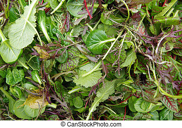pole, closeup, sałatkowe ziele, prospekt