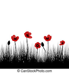 pole, czarny czerwony, maki