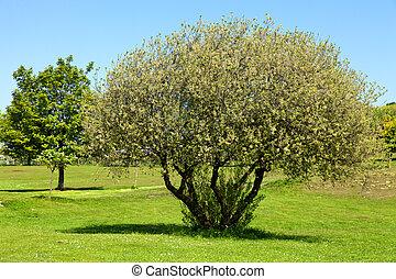 pole, golfowa zieleń, drzewa