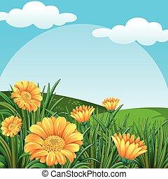 pole, kwiaty, tło, scena, żółty