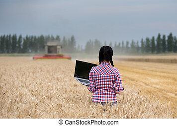 pole, laptop, kobieta, żniwa, podczas
