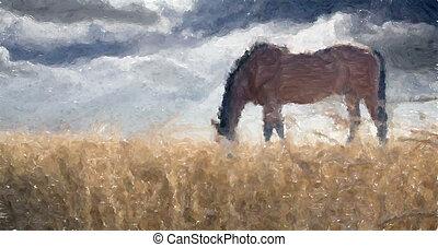 pole, stallion., pszenica