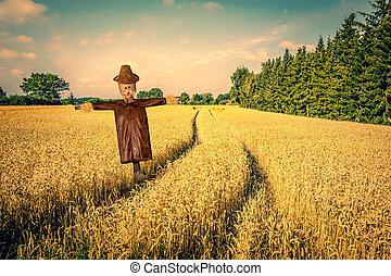 pole, strach na wróble, złoty