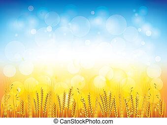 pole, wektor, pszenica, tło