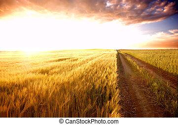 pole, zachód słońca