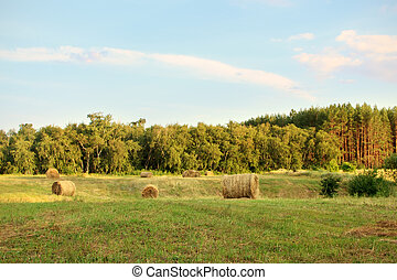 pole, zagroda, na, siano, zachód słońca, bele