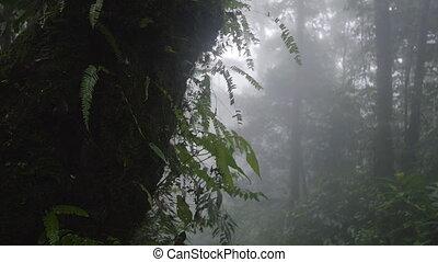 pole, zielone drzewa