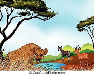 pole, zwierzęta