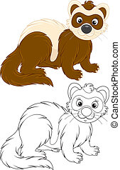 Polecat - Ferret, color and black-and-white illustrations on...
