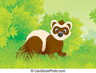 Polecat - Ferret walking on green grass in a forest