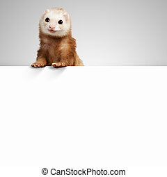 Polecat sitting on banner