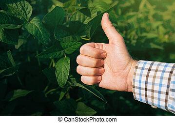 polegar, dar, cultivado, cima, campo, soja, agricultor