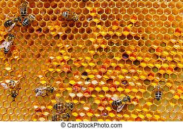 polen, almacenamiento