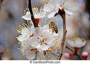 polen, colección, floral